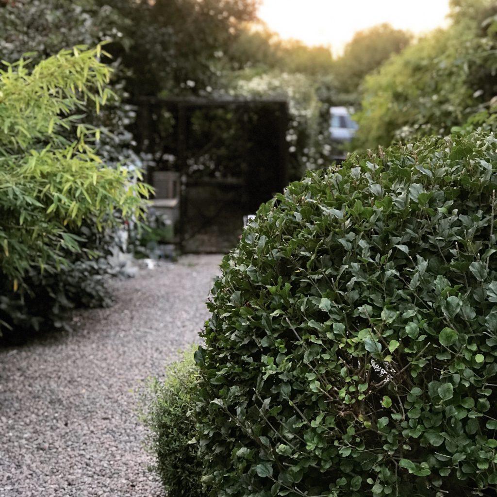 Lär dig utnyttja formklippta växter Onlinekurs för vackrare trädgård Formklippt syrén liguster natursingel bambu hönshus Kurser